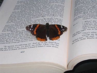 Red admiral butterfly reading page 422 of Little, Big by John Crowley, about 18:30 on 5 August 2007.